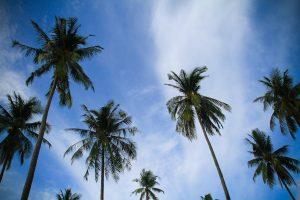 Phi Phi Palms