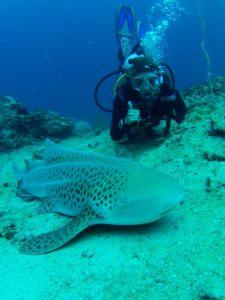leopard shark phi phi island