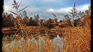 switzerland autumn iphoneography