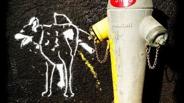street art iphoneography