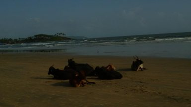 goa india backpacker beach