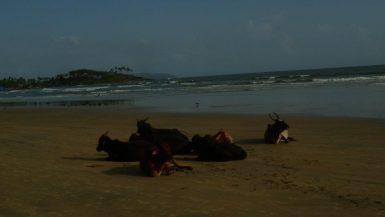 goa india backpacker beach
