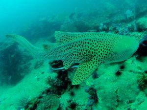 gopro scuba diving sharks thailand phi phi