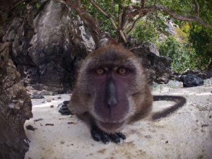 phi phi island monkey beach go pro