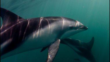 dolphin watching in Kaikoura new zealand