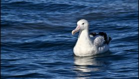 kaikoura dolphin watching albatross