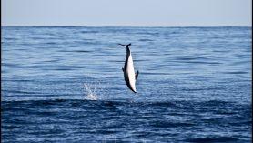 kaikoura dolphin watching backflip