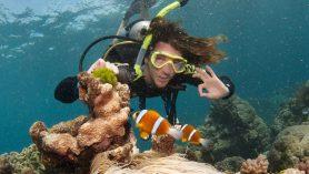 scuba great barrier reef cairns australia