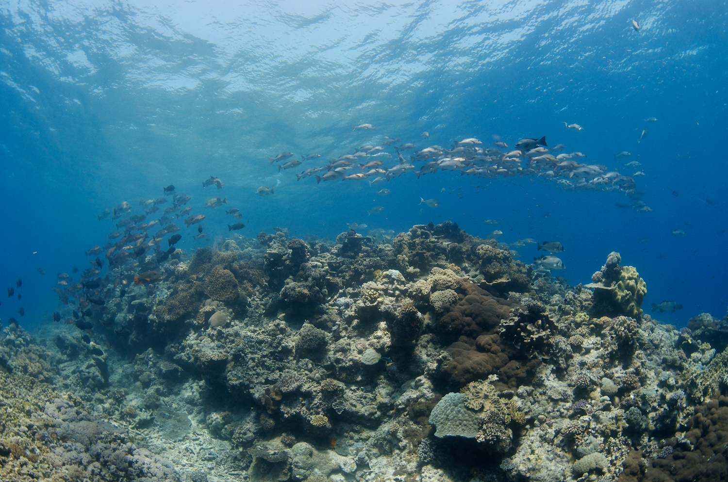 Hitting the water scuba diving on the great barrier reef cairns backpacker banter - Dive great barrier reef ...