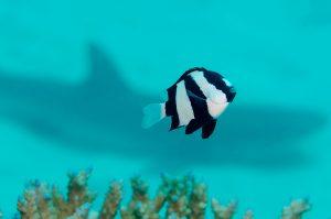 dive great barrier reef australia cairns