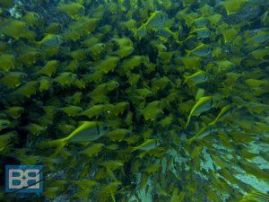 scuba diving australia byron bay