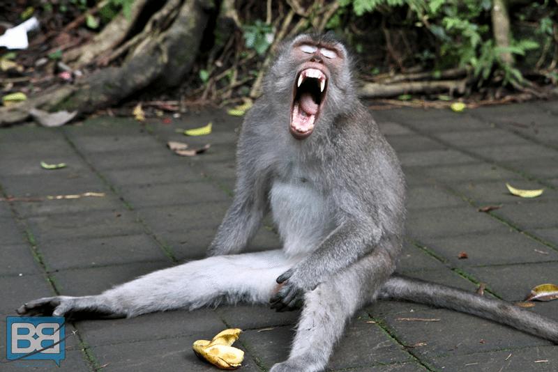 monkey temple forest ubud bali indonesia