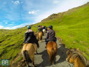 iceland pony trek icelandic horse day trip eldhestar (4 of 5)