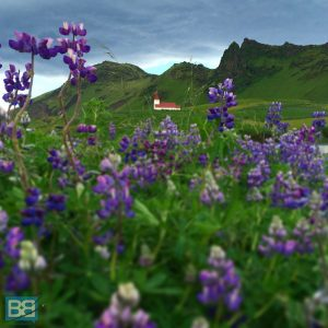 iceland reykjavik excursions photos tours day trip travel weekend (2 of 18)