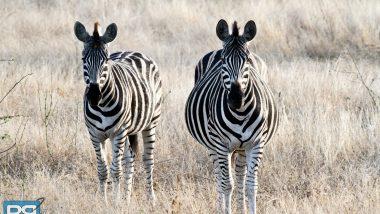 backpack south africa kruger safari travel intrepid tour (1 of 27) copy