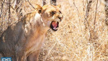 backpack south africa kruger safari travel intrepid tour (6 of 27) copy