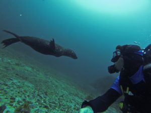 diving scuba seals 7 gill cow sharks cape town simons town south africa