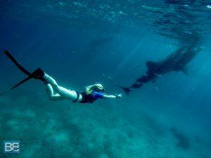 whale shark snorkelling oslob cebu philippines asia