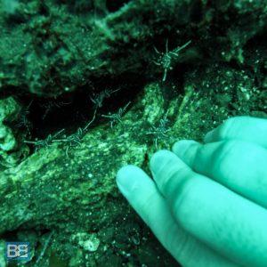 liberty wreck scuba dive tulamben bali reef divers