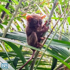 bohol philippines backpacker chocolate hills tarsier travel (1 of 6)