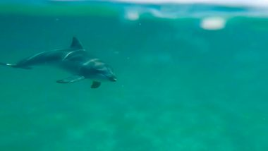 dolphin kayaking byron bay australia backpacker cape byron kayaks (1 of 2)