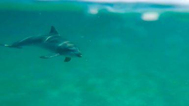 dolphin kayaking byron bay australia backpacker cape byron kayaks (1 of 2)