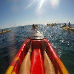 dolphin kayaking byron bay australia backpacker cape byron kayaks (2 of 2)