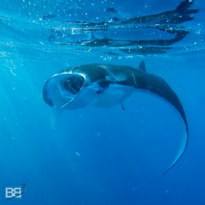 nusa lembongan island bali indonesia surfing scuba dive manta rays guide