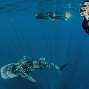 best places to visit in australia exmouth whale sharks