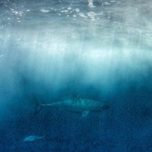 best places to visit in australia port lincoln shark cage diving
