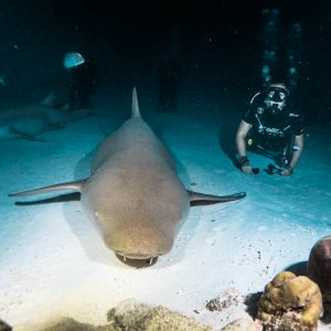 learn to scuba dive in the maldives padio open water fulidhoo dive alimatha shark night dive
