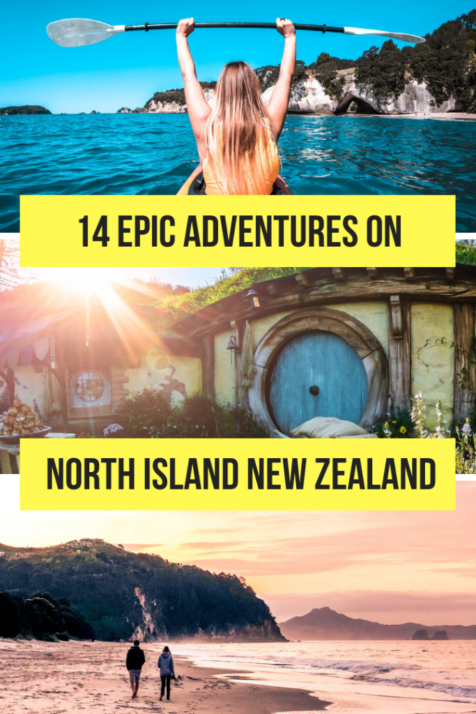 best things to do in new zealand north island nz stray kiwi (8 of 9)