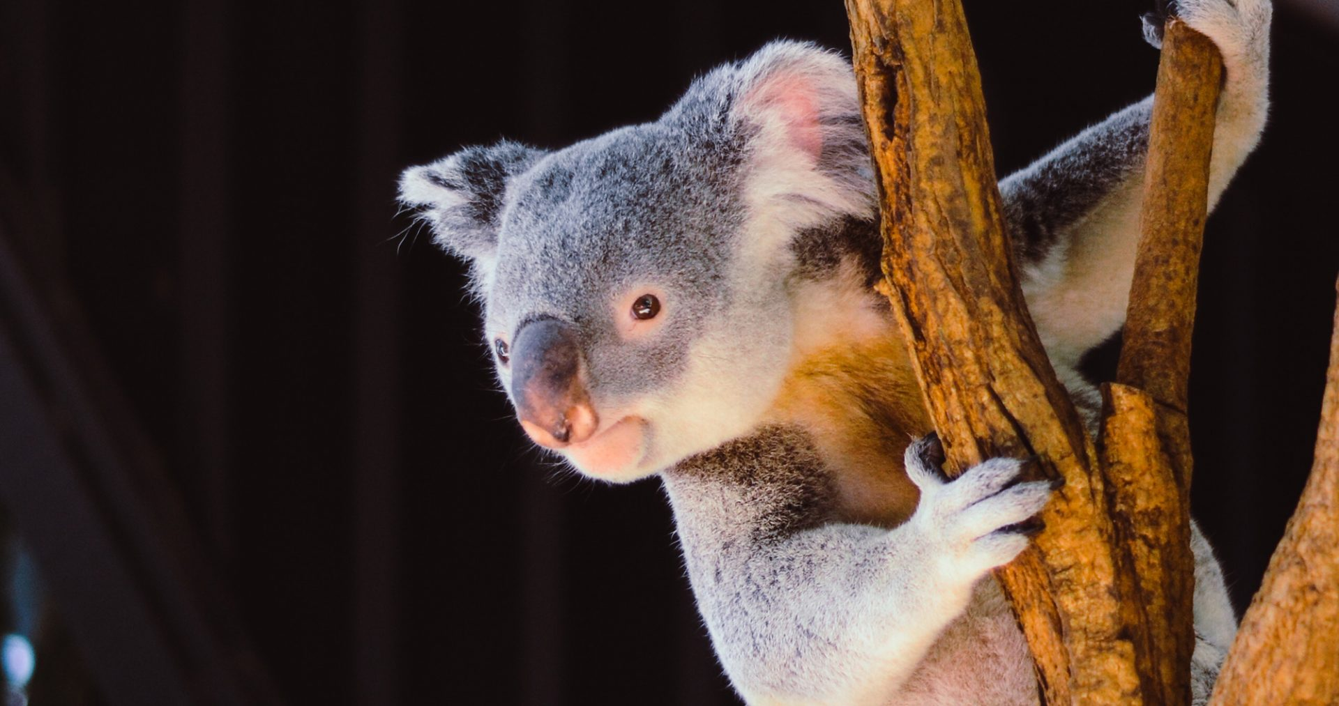 a to z travelling australia top facts destinations backpacker working holiday visa