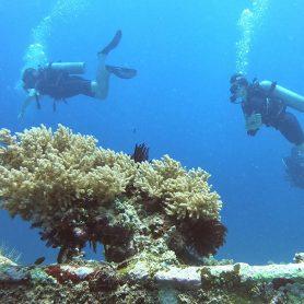 scuba diving Gili T Gili Trawangan blue marlin dive Indonesia bali