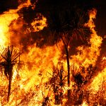 australia bushfire help donate link redcross wildlife
