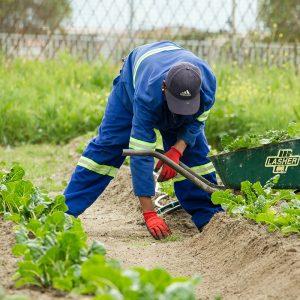 como encontrar um trabalho de mochileiro na austrália trabalho de fazenda com visto de segundo ano